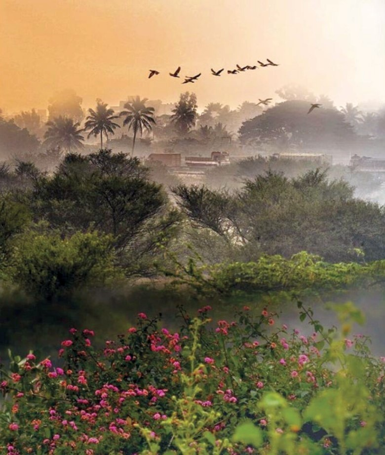 A misty winter morning in Bangalore, India. (Image - Soumika Dutta Singh)
