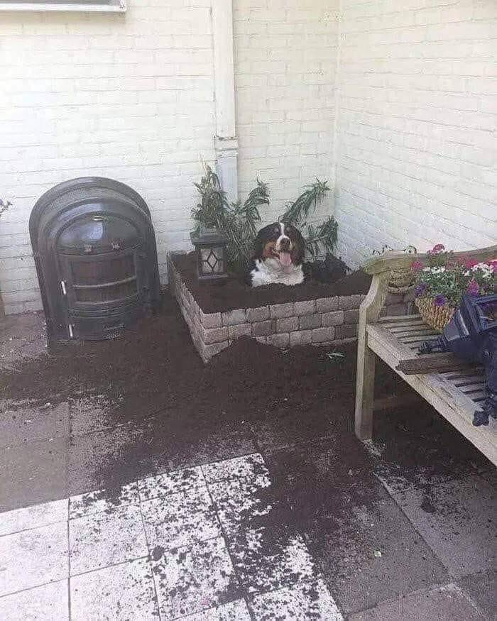 The garden assistant 🤦♂️